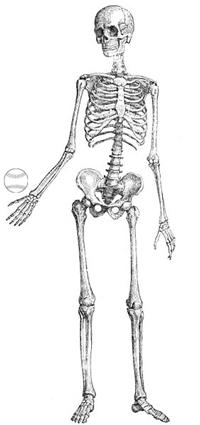 Skeleton-pitcher